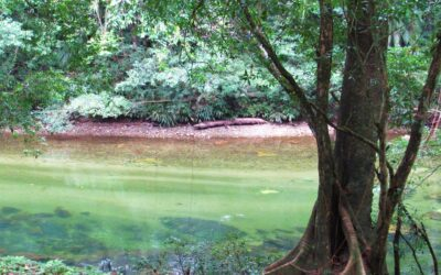 Reserva Natural Cañón del Río Claro en Colombia
